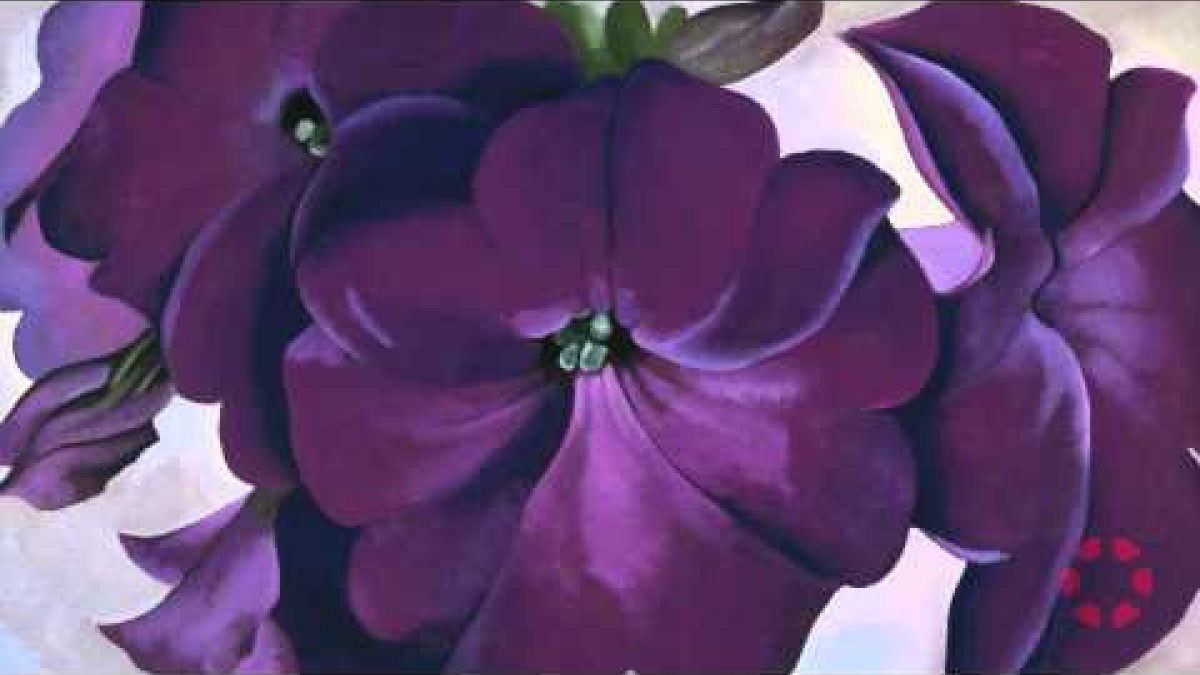 Conversations with Colin: O'Keeffe's Petunias