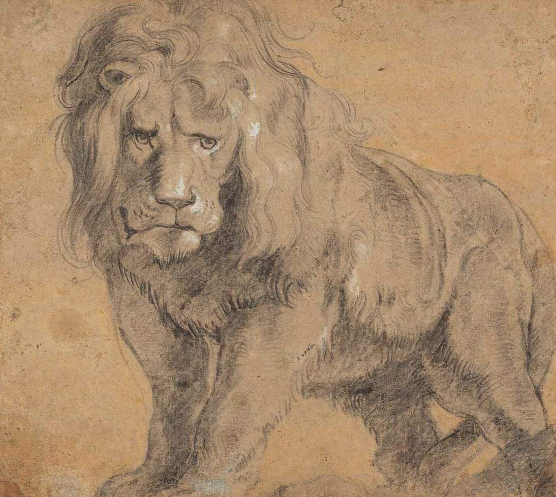 "Peter Paul Rubens, ""Lion,"" ca. 1612–1613. Black chalk heightened with white chalk, 9 15/16 x 11 1/8 in. (25.2 x 28.3 cm). National Gallery of Art, Washington D.C., Ailsa Mellon Bruce Fund. 1969.7.1. Courtesy the National Gallery of Art, Washington, D.C."