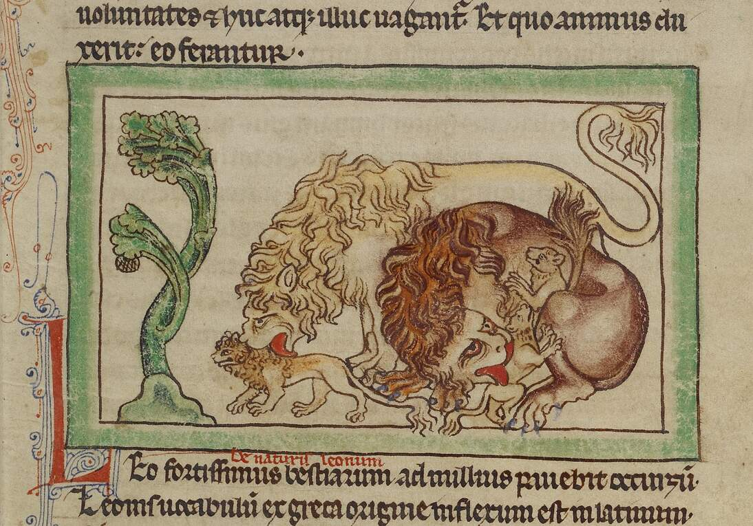 Lions (detail) in the Northumberland Bestiary, England, ca. 1250-60. Pen-and-ink drawing with translucent washes on parchment, J. Paul Getty Museum