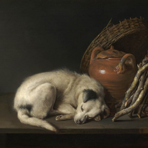 Dog at Rest